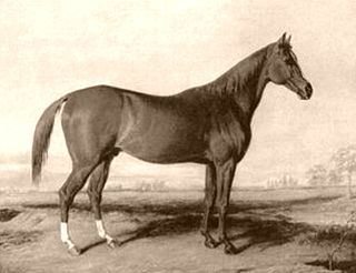 Boston (horse) American-bred Thoroughbred racehorse