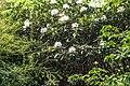 Botanic Gardens In Belfast - panoramio.jpg