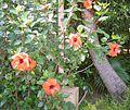 Botanical garden in Szeged.jpg