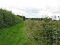 Bridleway Cleveley Oxfordshire - geograph.org.uk - 231086.jpg