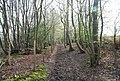 Bridleway NE of Burwash Weald - geograph.org.uk - 1253549.jpg