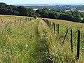 Bridleway on Chidden Down, Hambledon - geograph.org.uk - 1593162.jpg