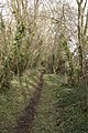 Bridleway to Great Coll Wood - geograph.org.uk - 336895.jpg