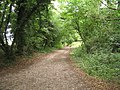 Bridleway to Pidden Hill - geograph.org.uk - 899401.jpg
