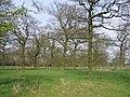 Brockhill Wood - geograph.org.uk - 156888.jpg