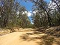 Brooman NSW 2538, Australia - panoramio (124).jpg