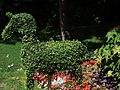 Buchsbaum Figur Pferd - panoramio.jpg