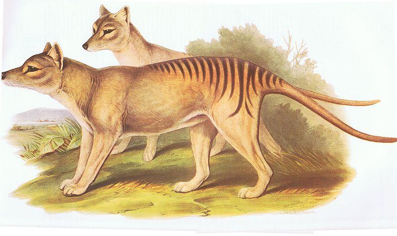 Mamíferos extintos Tigre de tasmania