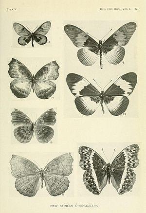 Acraea eltringhami - Image: Bulletin Hill Museum 1921Plate 10