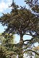 Buscot Park (5644497672).jpg