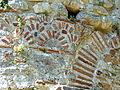 Butrint - Basilika 4 Mauerwerk.jpg