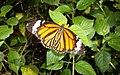 Butterflies Farm - panoramio.jpg