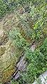 By ovedc - Thunderbird Falls - 04.jpg
