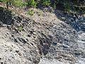 Bygdoy oslo IMG 2904 cambrosiluran geology.JPG