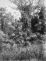 COLLECTIE TROPENMUSEUM Java rotanpalmen in het oerwoud van Djatiroto TMnr 60020252.jpg