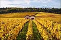 Cabottes, Burgundy.jpg
