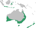 Caladeniinae distribution map.png