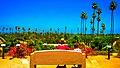 California Citrus & Palm (27998209364).jpg