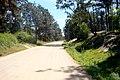 Calle Avenida Nogueira Pinamar - panoramio (11).jpg