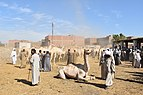 Camel market at Daraw in 2017, photo by Hatem Moushir 9.jpg