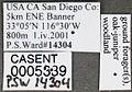 Camponotus anthrax casent0005339 label 1.jpg