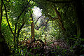 Canopied lane of laurels, Nuthurst, West Sussex, England 8.jpg
