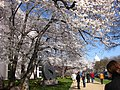 Capitol and Blossoms (3378311493).jpg