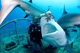 Shark Attack Miami Beach