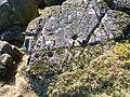 Carlin Crags - upper crag - rock-face 2.JPG