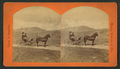 Carrie and Alfred with Alfred's pony 'Tim' (showing man and woman in small buggy), from Robert N. Dennis collection of stereoscopic views.png