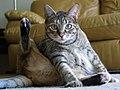 Cat hygiene.jpg