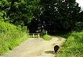 Cattle grid on Rutland Water Circuit - geograph.org.uk - 968684.jpg