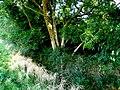 Cerne Park Pale - geograph.org.uk - 1492386.jpg