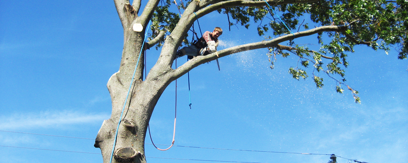 Tweed Heads Tree Expert trimming a Gold Coast tree prior to storm season