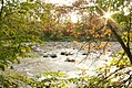 Chagrin River viewed through leaves.jpg