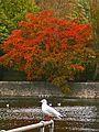 Chellow Dean Reservoir (2981768183).jpg