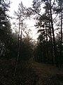 Cherkas'kyi district, Cherkas'ka oblast, Ukraine - panoramio (701).jpg