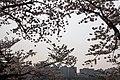 Cherry Blossom in Yeouido Park - panoramio.jpg