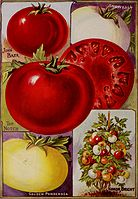Childs' seeds that satisfy bulbs that bloom plants that please (1919) (14760822464) .jpg
