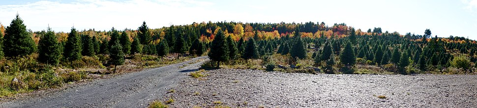 Christmas tree farm near New Germany, Nova Scotia, Canada