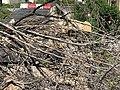 Chute de rochers à Saint-Rambert-en-Bugey en mars 2020 (photo de juin 2020) - 7.jpg