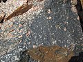 Clast-rich impact pseudotachylite (Sudbury Breccia, Paleoproterozoic, 1.85 Ga; Windy Lake Northwest roadcut, Sudbury Impact Structure, Ontario, Canada) 66 (47705672272).jpg