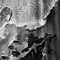 Columbia Glacier, Calving Terminus, Heather Island, August 25, 1965 (GLACIERS 959).jpg