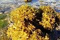 Coral Reef (چیز دریایی دو) (2500591017).jpg
