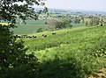 Corton Gorse - geograph.org.uk - 487112.jpg
