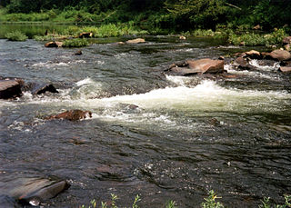 Cossatot River river in the United States of America