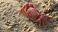 Crabs in sand.jpg