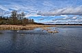 Cranberry Marsh1.jpg