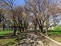 Curico, plaza (15400896179).jpg