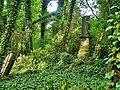 Częstochowa - cmentarz żydowski,,.jpg